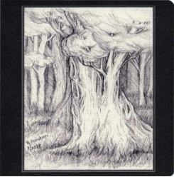 Big Shady Tree Note Card