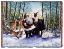 SANTA IN THE FOREST THROW    2395-T